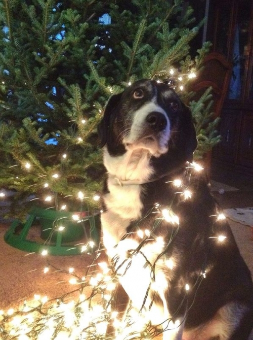 'Tis the Season for Sights, Smells, Soirees and Stressed Pets