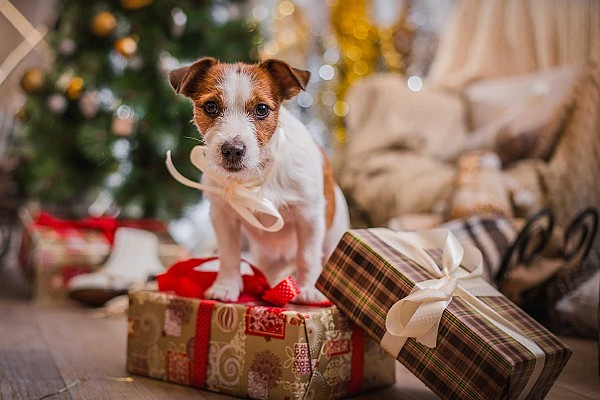 The Gift Guide for Your Canine